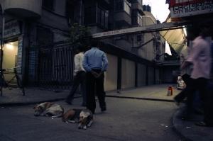 Colaban koiria. Intiassa moni asia on huonosti, mutta kulkukoiria ei potkita.